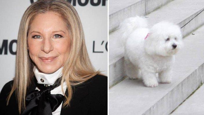 Kloniranje psa